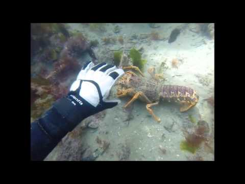 SCUBA Diving For Crayfish NZ 2015