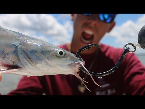 Let's See What Happens... Saltwater CATFISH USED As Bait Challenge