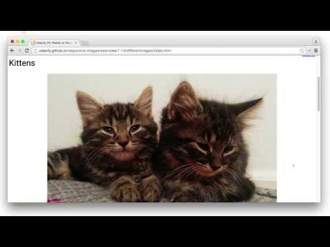 Raster & Vector Identification Solution - Responsive Images
