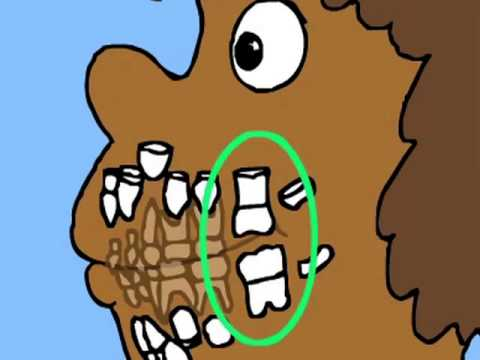 How Teeth Grow