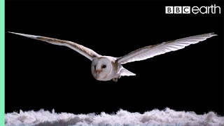Experiment! How Does An Owl Fly So Silently? | Super Powered Owls | BBC