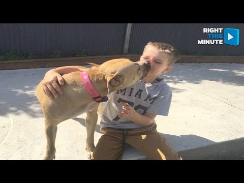 Scared Rescue Dog Won Over by Young Boy