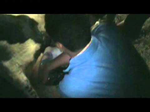 Xxx Mp4 Cow Partus Co Ass Group A1 10 1 Mp4 3gp Sex
