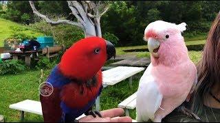 Free Flight Parrot Day 8 8_17