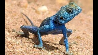 Lezards - Mystérieuse évolution - Documentaire