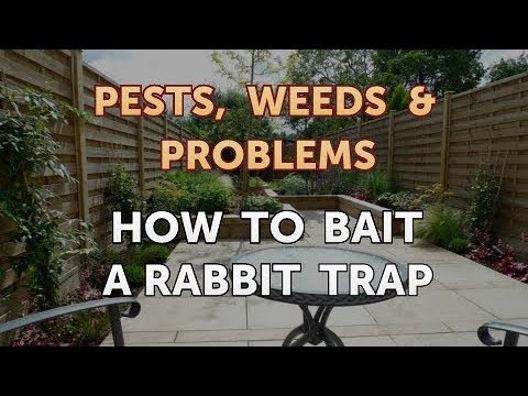 How to Bait a Rabbit Trap