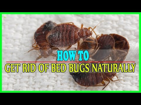 9 Effective Home Remedies To Get Rid Of Bed Bugs Naturally | Best Home Remedies