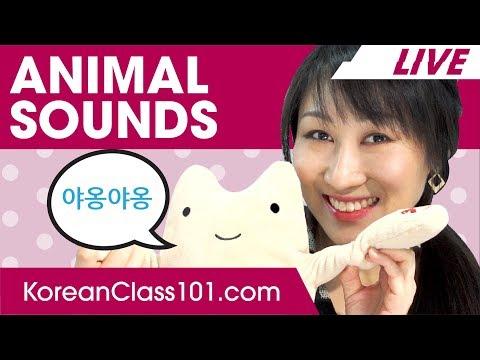 Animal Sounds in Korean - Onomatopoeia | Learn Basic Korean