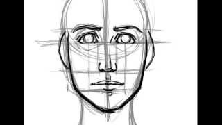 How To Draw A Face Basic Proportions