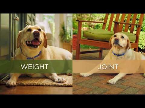 Hill's™ Prescription Diet™ Metabolic + Mobility DOG UK