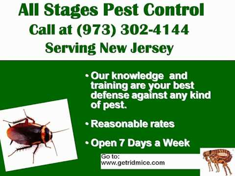 New Jersey Rodent Extermination Service (Mice Rat) Open Everyday