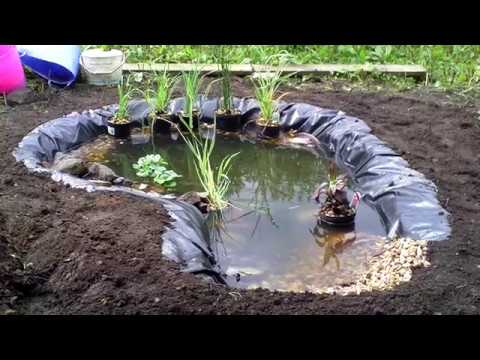 Wildlife pond in ONE DAY! The Backyard Vegan UK