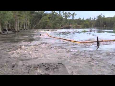Raw: Louisiana Sinkhole Swallows Giant Trees