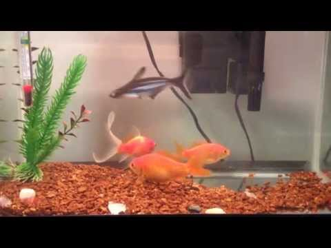How to fix get rid of algae slime in a fish tank