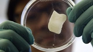 The Process of Growing Bones From Scratch