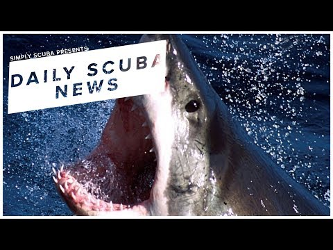 Daily Scuba News - Has The Real Life Jaws Been Found?