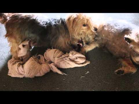 Spielen und Rangeln meine Hunde