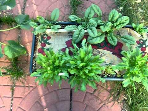 Kate's Garden Patch Grow Box Veggie Garden