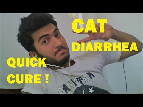 CAT DIARRHEA CURE WITH CHICKEN FEET quick result | 2017 latest search VLOG CAT
