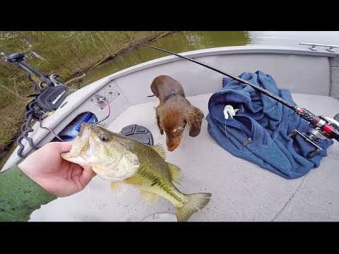 Spring Bass Fishing With The Puppy -- (She is GOOD Luck)