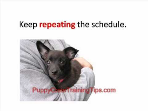 Puppy Crate Training - Teach Your Dog to Sleep Quietly in his Crate
