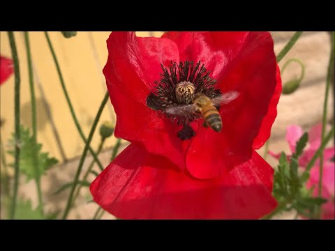 🐝🦋 LIVE: 3 TIps to Attract  Pollinators to Your Garden, Live Q & A (REPLAY)