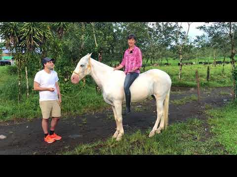 Conscious Horse Conscious Rider