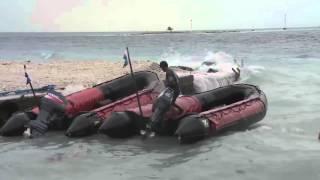 Pacific Ocean Sharks & Animals [Best Shark Nature Wildlife Documentary]