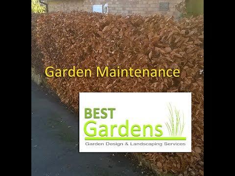 Garden Maintenance - Hedge Cut - Autumn Leaf Clearance