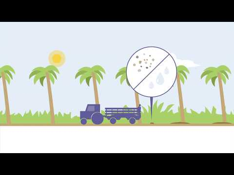 How is palm oil produced? (1) The Mill