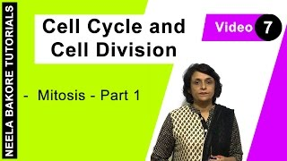 Cell Cycle Cell Division Mitosis Part 1