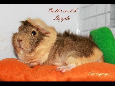 Fleece Bedding: Guinea Pig Cage Liner Information