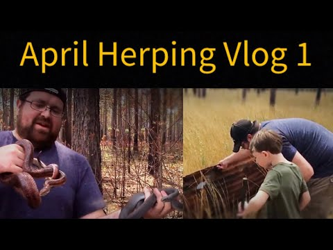 Corn Snakes and Family Time ~ Herping April 2nd 2018