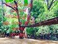 Bridge made of bamboo in Attappadi