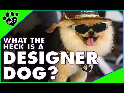Designer Dogs 101: What the Heck is a Designer Dog? - Animal Facts