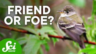 6 Surprisingly Helpful Invasive Species