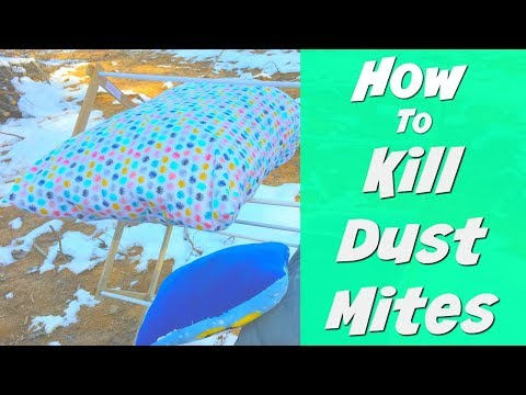 How to Kill Dust Mites | Cold Weather Cleaning Hacks | Winter Cleaning