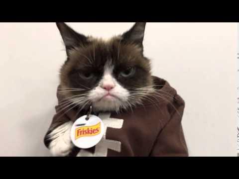 Grumpy Cat No's Football