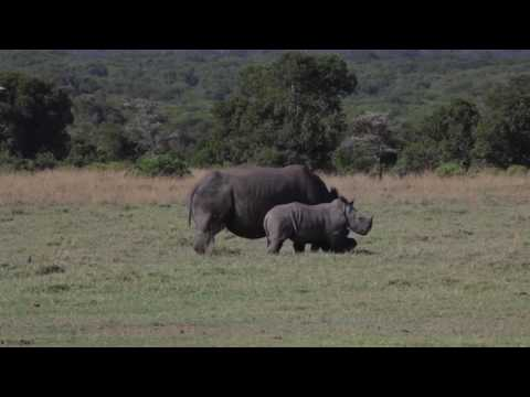 ELEPHANT POACHING PSA