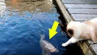 #x202b;صداقات بين الحيوانات أفضل من صداقات البشر بمليار مرة!#x202c;lrm;