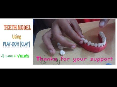 Very Easy TEETH Model Making Using Clay(play-doh) - VISHNU HARIDASS(9yrs old)