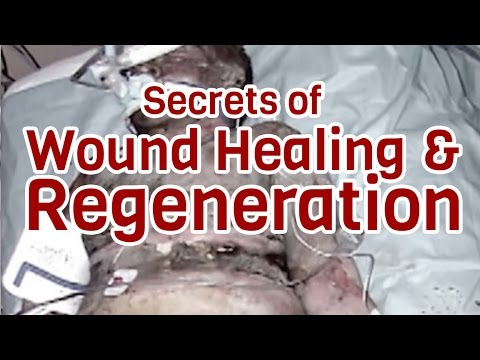 Secrets of Wound Healing and Regeneration - Dr. Bart Flick