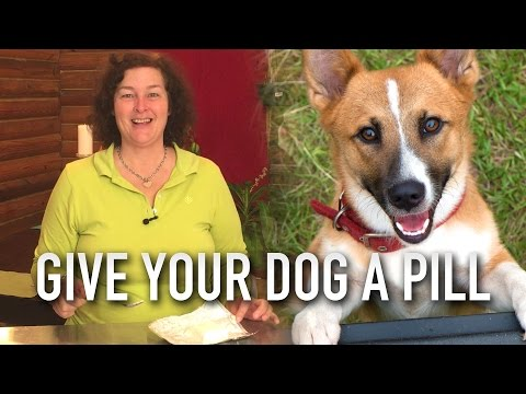 How to give a dog a pill, the easy way.