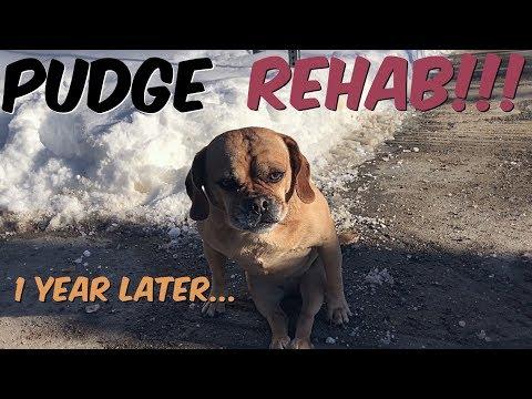 PUDGE REHAB UPDATE - STARTING TO WALK!!!