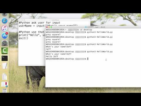 Python: User Input as a Variable