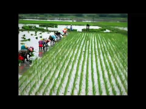 How to improve the ground water level and farmers