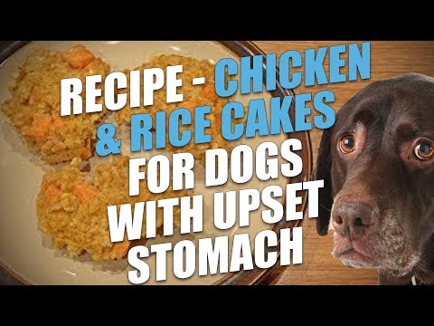 Homemade Chicken & Rice Cakes for Dogs with Upset Stomach