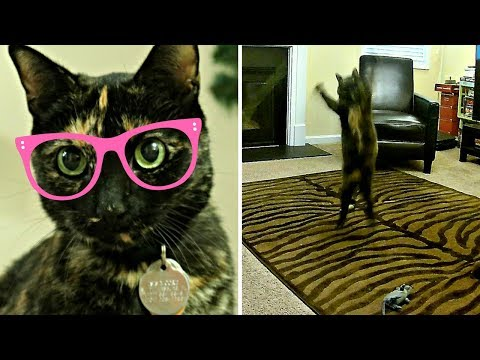 CAT REDFOO? | Ultimate Cat Jumping Workout | MOORE APPROVED FUNNY CAT VIDEOS