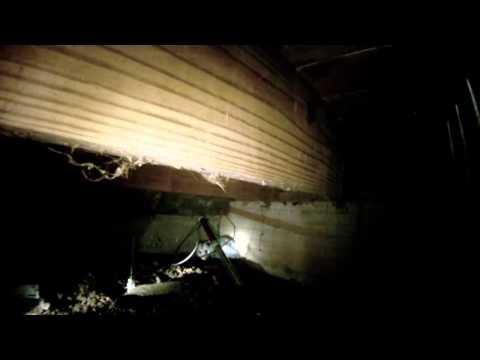 WILDLIFE EVICTORS catches opossum under low lying deck