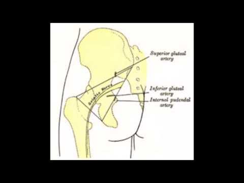 How To Get Rid Of Sciatica - How To Relieve Sciatica Pain While Sleeping